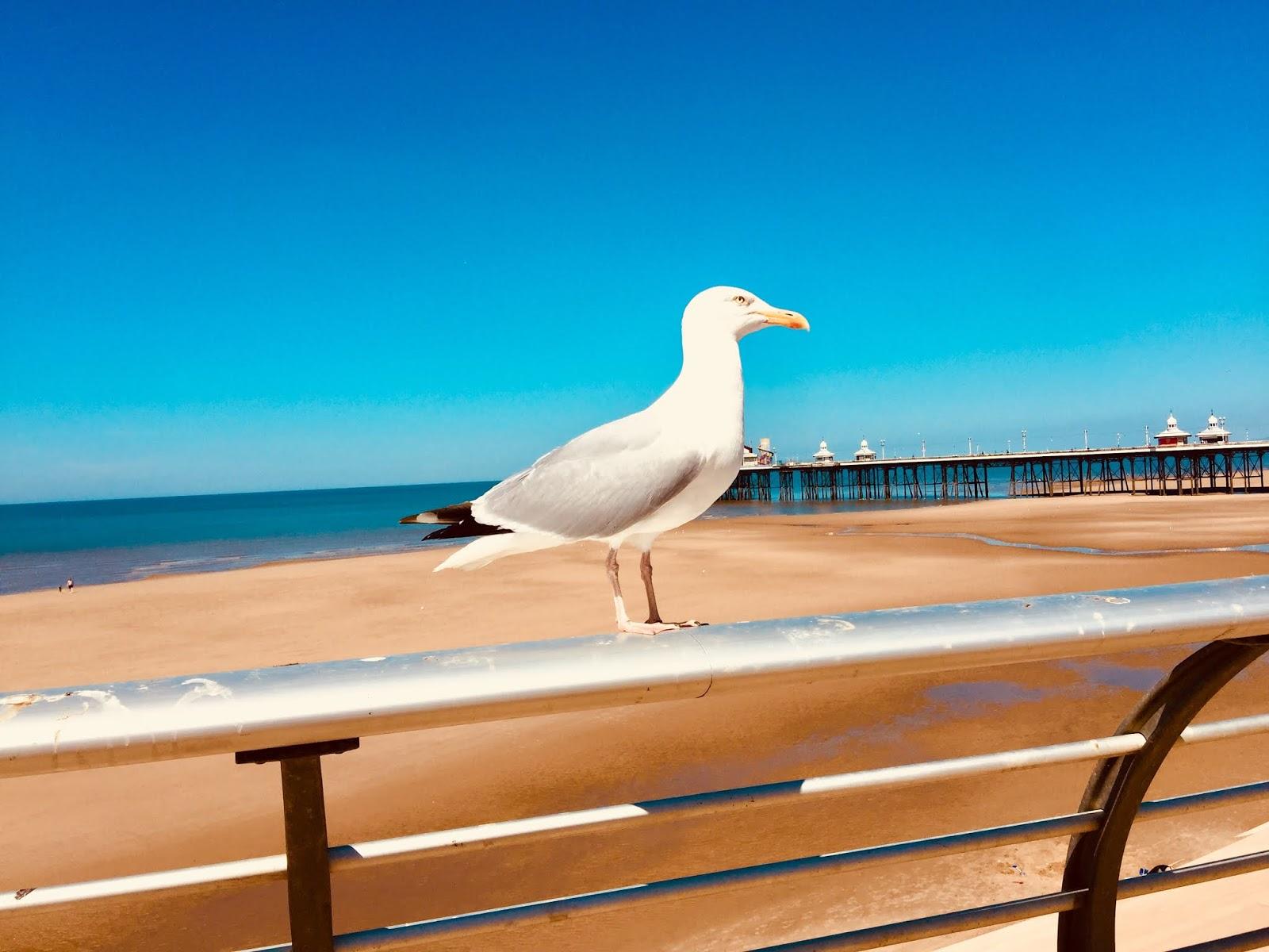 blackpool, seaside, lancashire, staycation, travel, travelling, holiday, summer